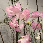 2月3日 「幸せの理由」 佐藤和宏牧師