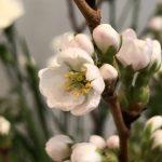 4月7日 「本来に生きる」 佐藤和宏牧師