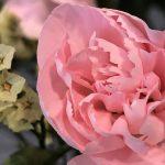 8月4日 「愛と平和と」 佐藤和宏牧師