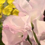 2月23日 「神が輝くとき」 佐藤和宏牧師