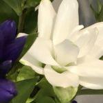8月23日 「草は枯れ、花は散るとも」 佐藤和宏牧師