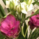 9月13日 「憐れみの中で」 佐藤和宏牧師